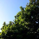 「新緑の風景」